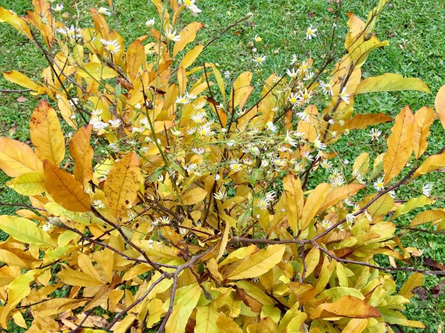 magnolie&blumen.jpeg